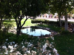 SDSU turtle pond